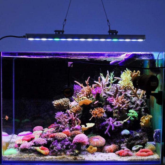 освещение аквариума светодиодными лампами