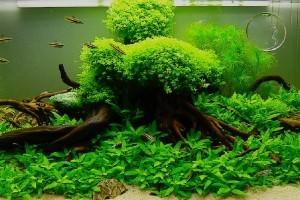 аквариумные растения для новичков