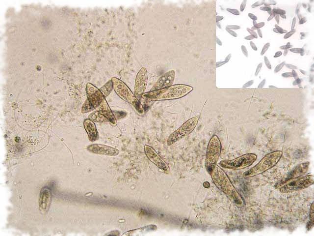 живая пыль под микроскопом