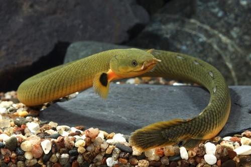 rope fish - Erp