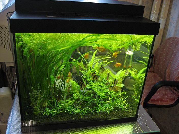 аквариум 10 литров