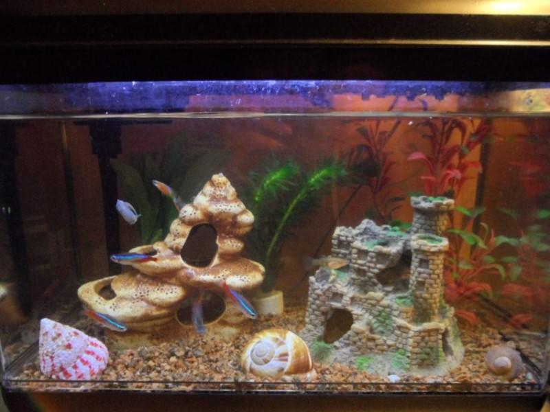 аквариум с замком