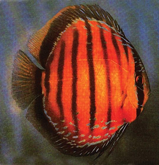 Король аквариума