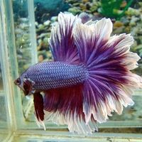Аквариумные рыбки для начинающих8