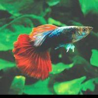 Аквариумные рыбки для начинающих1