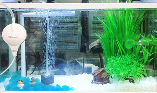 Аэрация в аквариуме – основа биофильтрации