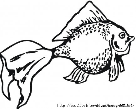 96750208_goldenfishcoloringwpage (435x350, 87Kb)