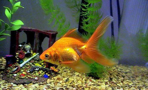 аквариумные рыбки фото и описание