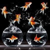 К чему снятся рыбы в воде