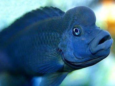 Самые красивые аквариумные рыбки7