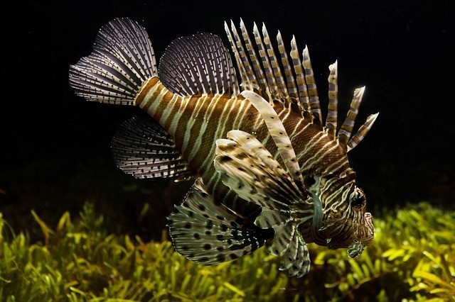 самые красивые рыбки для аквариума