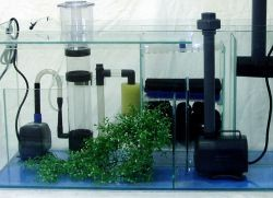 кислород для рыбок в аквариуме