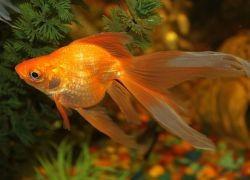 Сколько раз в день кормить рыбок