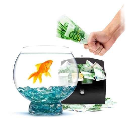 аквариум цена