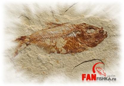 древняя рыба