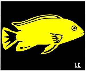 лабидохромис еллоу желтая цихлида рисунок