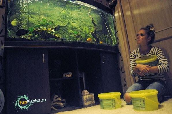 как же сменить воду в аквариуме