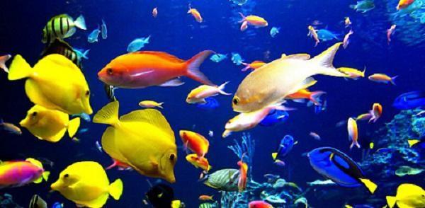 Таблица совместимости аквариумных рыб