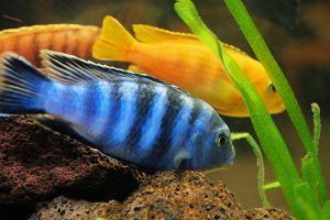 таблица совместимости аквариумных рыбок фото