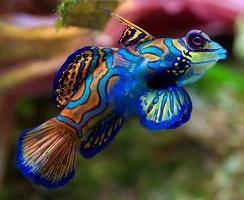 таблица совместимости пресноводных аквариумных рыб