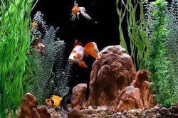совместимость рыбок
