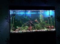 Светодиодная лента для аквариума2