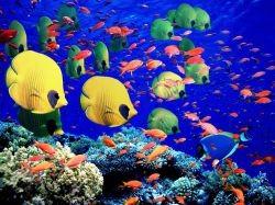 Аквариумные рыбки и их родина