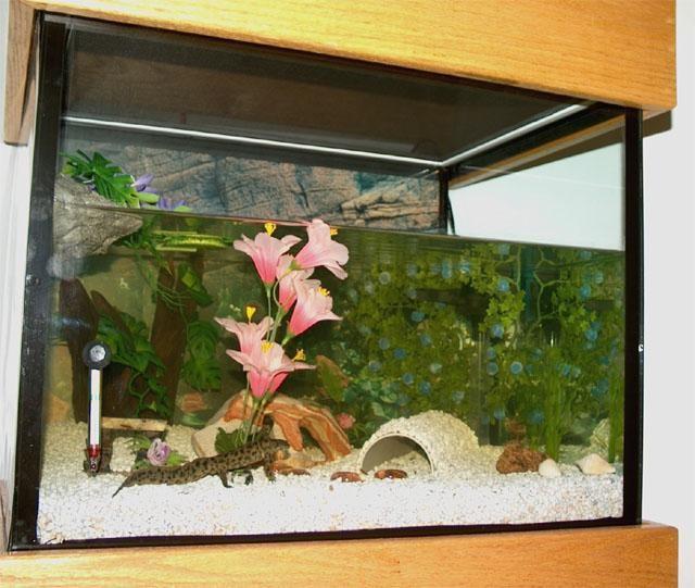 тритоны в аквариуме содержание