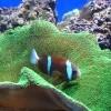 Как выбрать аквариум в детскую комнату