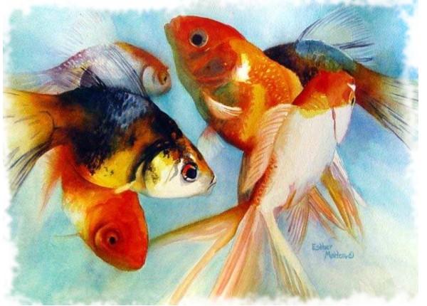 пол золотых рыбок