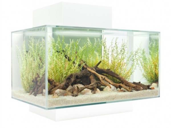 правильный аквариум