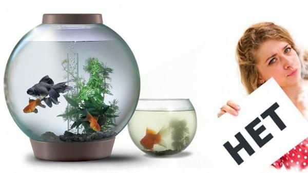 круглый аквариум почему нет