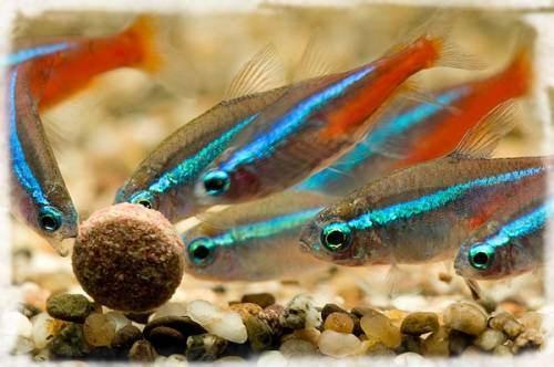 рыбки едят корм
