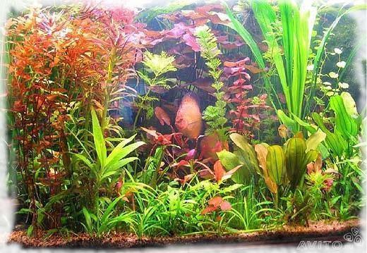 много аквариумных растений и рыб