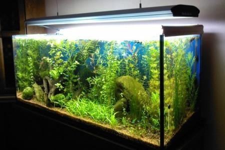 аквариум голландского типа
