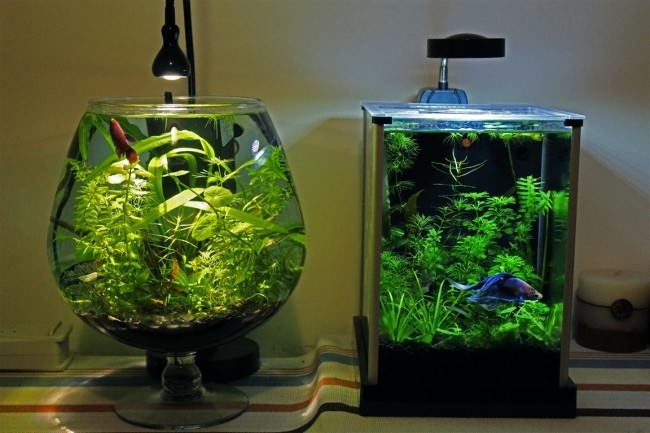 Два аквариума.