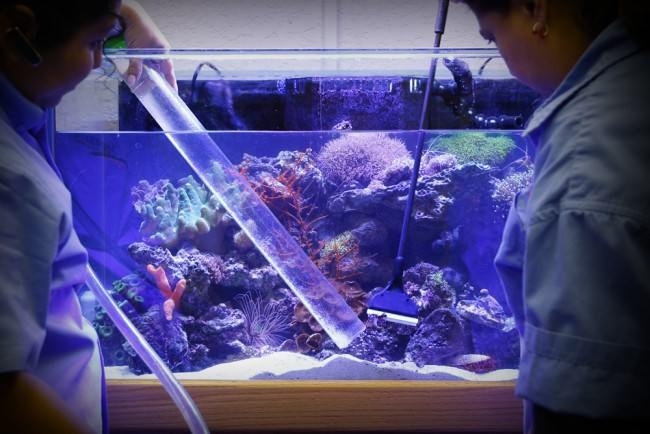 Чистка аквариума.