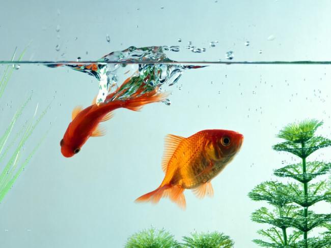 Вода в аквариуме.