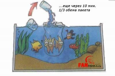 правила пересадки рыбок Тетра