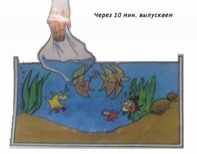 правила пересадки рыб с пакета тетра