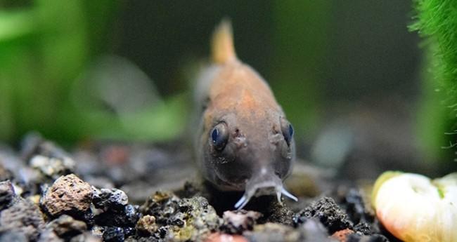 Рыбки донные для очищения воды.