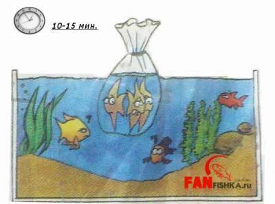 правила пересадки рыбок