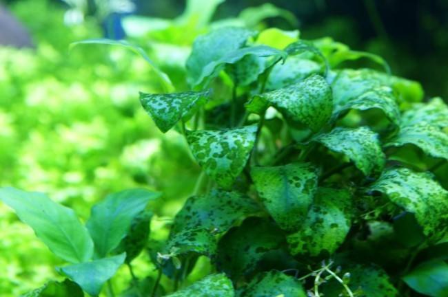 Сине-зеленые водоросли.