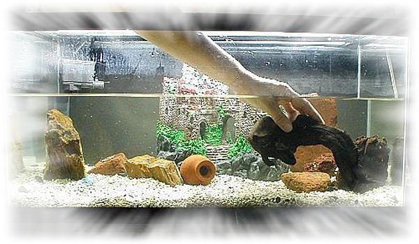 молодой аквариум