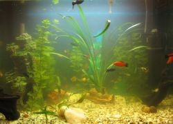 Мутная вода в аквариуме: что делать