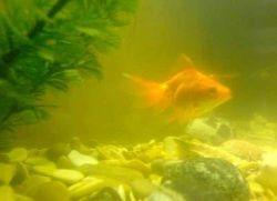 Мутная вода в аквариуме: что делать1