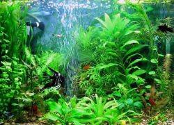 воздушный компрессор для аквариума