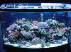 Свет для рыбок в аквариуме