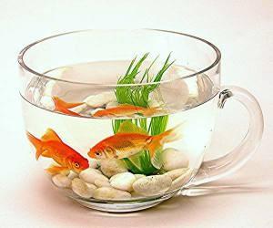 сколько отстаивать воду для аквариума1