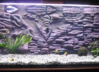 Задний фон для аквариума1